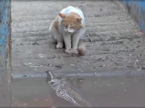 Cat and Croc